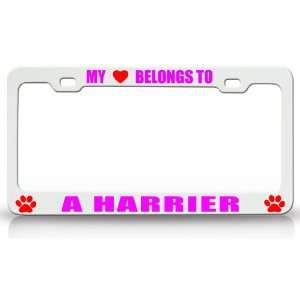MY HEART BELONGS TO A HARRIER Dog Pet Steel Metal Auto License Plate